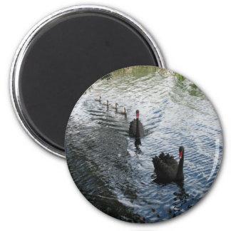 Cisnes negros, Perth Imán Redondo 5 Cm