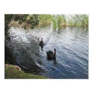 """Cisnes negros, Perth Invitación 4.25"""" X 5.5"""""""