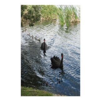 Cisnes negros, Perth Papelería Personalizada