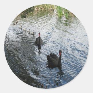 Cisnes negros, Perth Pegatina Redonda