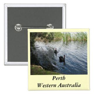 Cisnes negros, Perth Pin Cuadrado