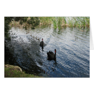 Cisnes negros Perth Felicitaciones