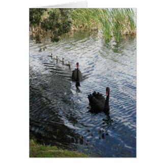 Cisnes negros, Perth Tarjeta De Felicitación