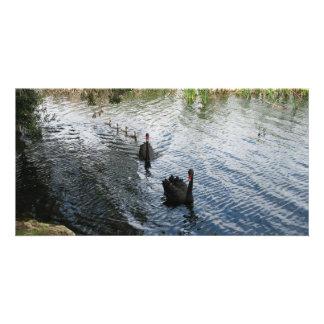 Cisnes negros, Perth Tarjeta Fotográfica Personalizada