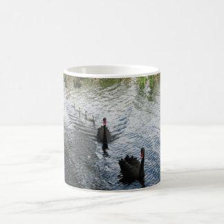 Cisnes negros, Perth Taza Clásica