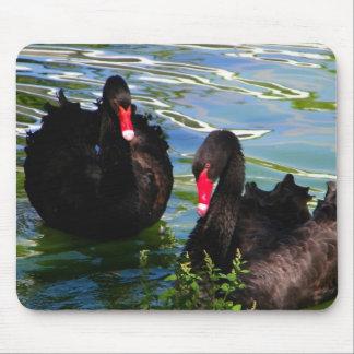 Cisnes negros alfombrilla de raton