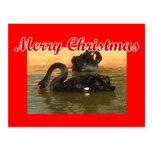 Cisnes negros tarjeta postal