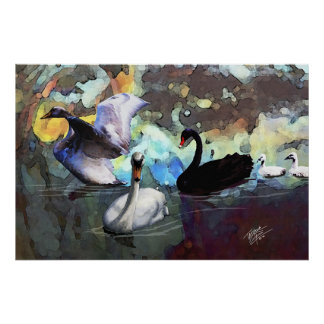 Cisnes que nadan póster
