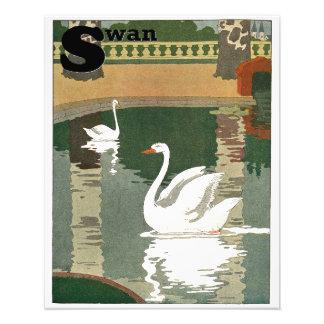 Cisnes reflejados en el agua cojinete