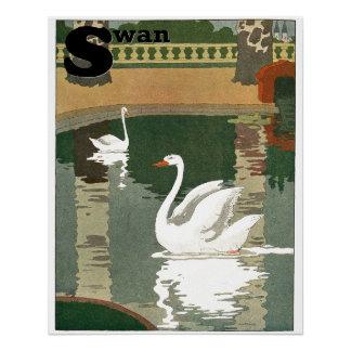 Cisnes reflejados en el alfabeto del agua perfect poster