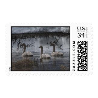 Cisnes tempestuosos sellos