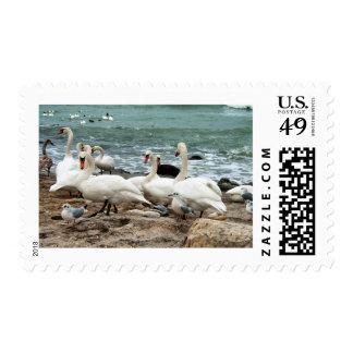 Cisnes Timbres Postales