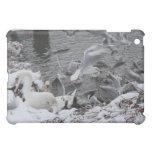 cisnes y gaviotas en la nieve