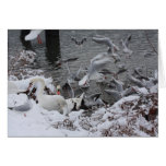 cisnes y gaviotas en la nieve felicitación