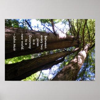Cita de Muir de los árboles de la secoya Póster