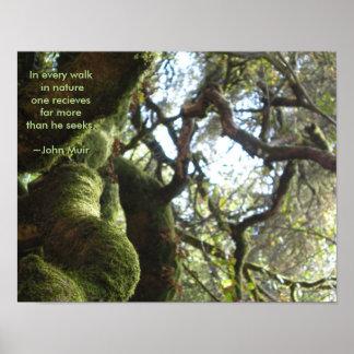 Cita de Muir de los robles vivos Póster