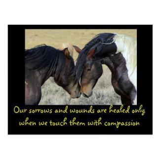 Cita inspirada. Dos caballos salvajes Nuzzling Tarjetas Postales
