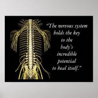Citas de la quiropráctica y sistema nervioso de póster