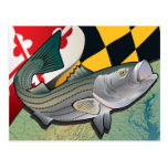Citizen Rockfish of Maryland Postcard