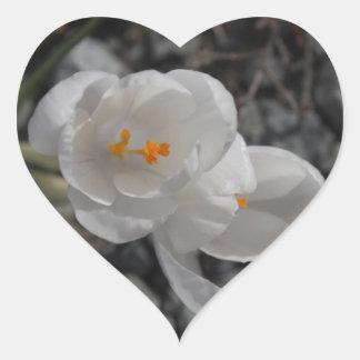 CITR Crocus in the Rocks Heart Sticker