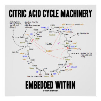 Citric Acid Cycle Machinery Embedded Within Krebs Poster