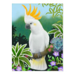 Citron Cockatoo Postcard