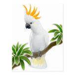 Citron Crested Cockatoo Postcard