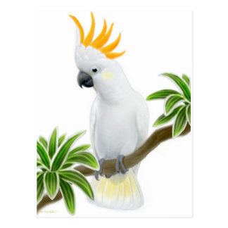 Citron Crested Cockatoo Postcard