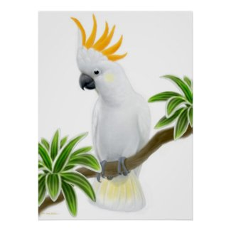 Citron Crested Cockatoo Poster