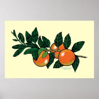Citrus branch poster