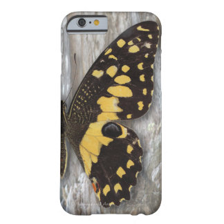 Citrus Butterfly Barely There iPhone 6 Case