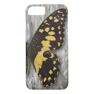Citrus Butterfly iPhone 7 Case