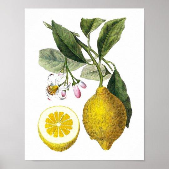 Botanical Wall Art citrus fruit lemon botanical print no. 9 wall art | zazzle