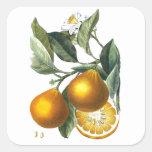 Citrus Fruit Orange Botanical art no. 5 Home Decor Square Sticker