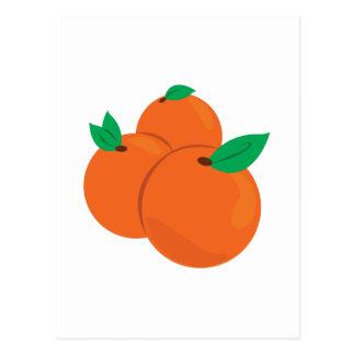Citrus Fruit Postcard