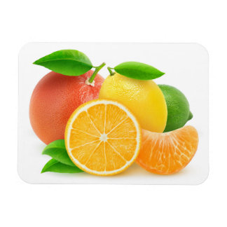 Citrus fruits magnet