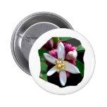 Citrus Lemon Blossom Poster Image of Flower Buttons