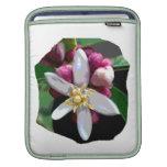 Citrus Lemon Blossom Poster Image of Flower Sleeve For iPads