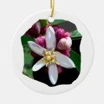 Citrus Lemon Blossom Poster Image of Flower Christmas Tree Ornament