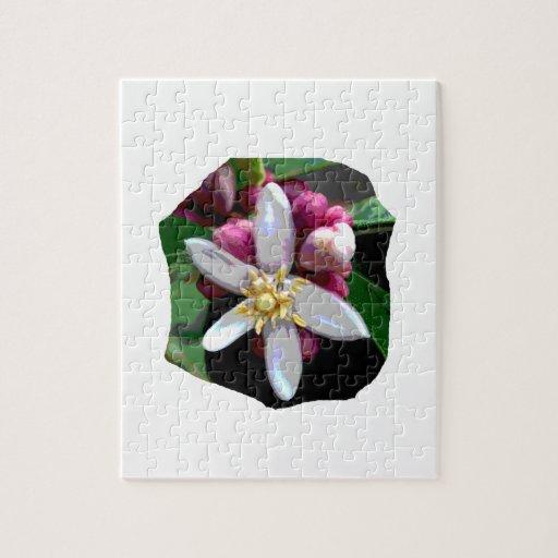 Citrus Lemon Blossom Poster Image of Flower Puzzles