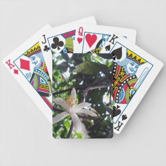 Citrus × limon bicycle playing cards