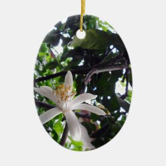 Citrus × limon ceramic ornament