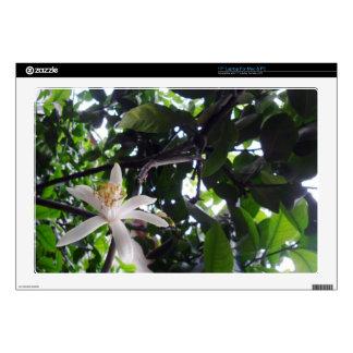 """Citrus × limon decal for 17"""" laptop"""