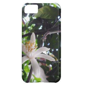 Citrus × limon iPhone 5C cover
