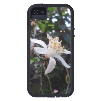 Citrus × limon iPhone SE/5/5s case