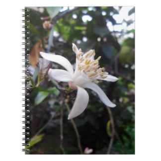 Citrus × limon notebook