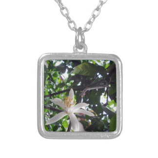 Citrus × limon silver plated necklace