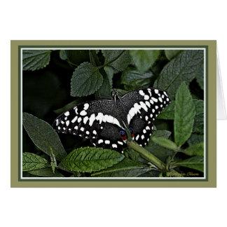 Citrus Swallowtail, Card