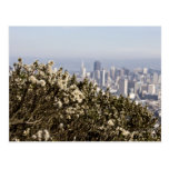 City Behind the Bushes Postcard