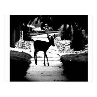 City Buck Postcard